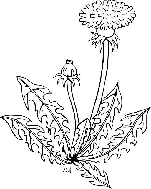 dandelion-icon-mirrored